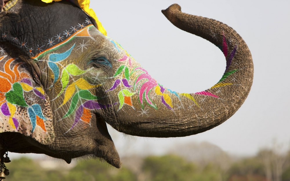 BIG_elephant_14999384011027